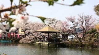 旅レポ【長野県】厳選お花見スポット