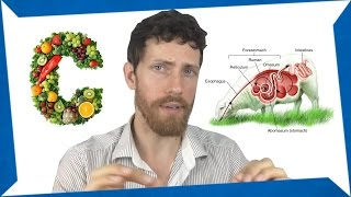 My 'Humans are Herbivores' Video Was Debunked :(
