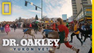 Running With the Reindeer | Dr. Oakley, Yukon Vet