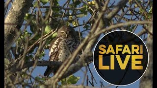 safariLIVE - Sunrise Safari - 2018, 19. June