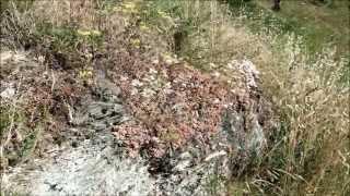 preview picture of video 'Passeggiata a Rossiglione'