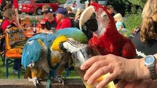 50+ Parrots Visit Beer Garden in Germany