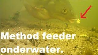 Method feeder onderwater beelden. Brasem pakt het aas./underwater footage. Bream takes the bait 2017