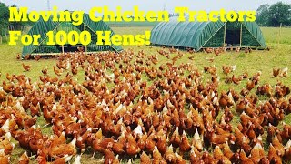 Moving Chicken Tractors For 1000 Laying Hens