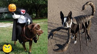 Creative Halloween Costumes For Dogs