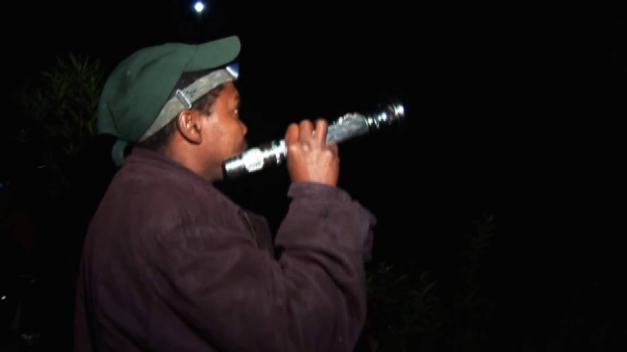 Madagaskar: Nachtwanderung Andasibe Reservat (0:56)