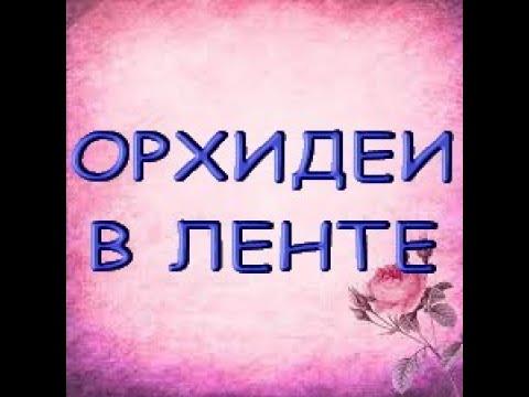"""ОРХИДЕИ:завоз в ЛЕНТЕ,19.08.21,ТЦ """"ЭльРио"""",Московское ш.,205,Самара."""
