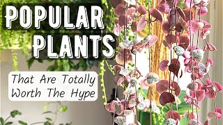 Popular Houseplants That Are Totally Worth The Hype