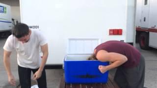Toby & Torrance :Ice Bucket Challenge