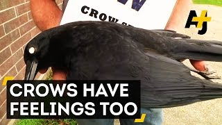 Gambar cover Crows Hold Funerals And Remember Enemies