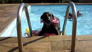 Brincar e nadar com a segurança da Plataforma Savedog