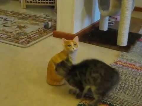 Când pisicile ne îmbunătăţesc starea de spirit