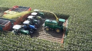 Chopping 20 rows of corn with Kemper