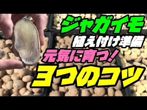 , title : '【ジャガイモの栽培方法①】「準備編」3つのコツで丈夫に元気に大量に育つ!