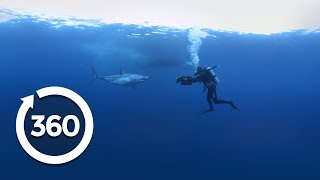 Mako Madness | Shark Week (360 Video)