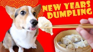 Lunar New Year DUMPLINGS for Year of the DOG || Life After College: Ep. 585