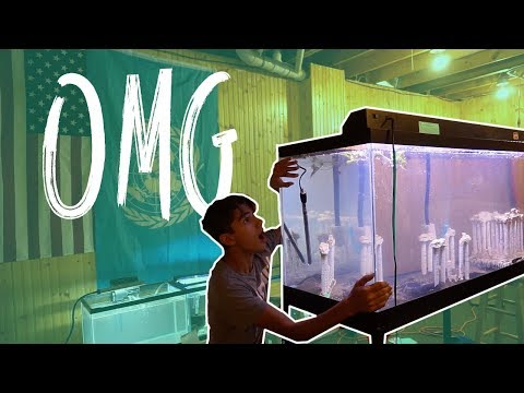 I GOT A 90 GALLON FISH TANK!?!
