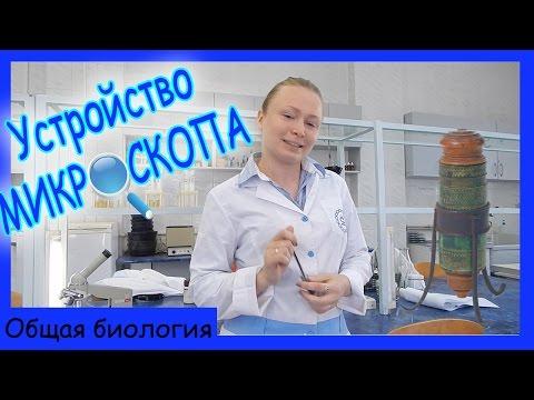 Урок биологии №50. Строение микроскопа.