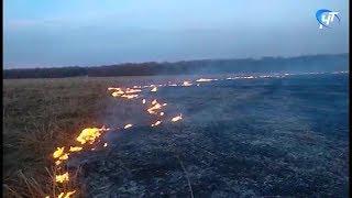 Более 80 травяных пожаров произошло в Новгородской области за минувшие выходные