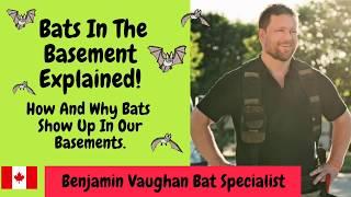 Bats In The Basement