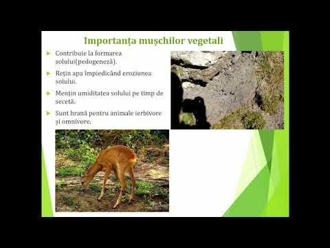 Papillomavirus hpv