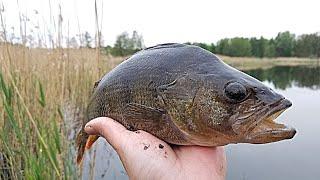 Новая приманка для ловли рыбы на удочку