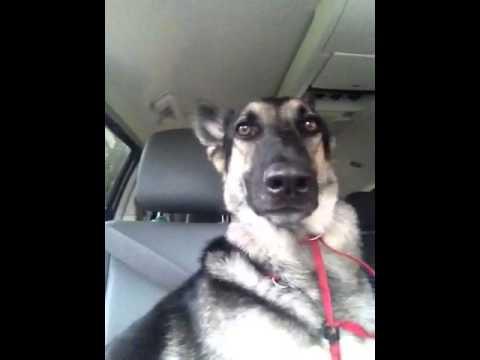 Кучето, което взриви интернет със своя талант