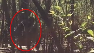 5 Scary Bigfoot Encounters Caught on Camera