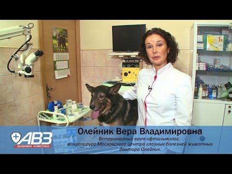 Профилактика и лечение глаз у собак