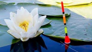 Натуральные ароматизаторы для рыбы