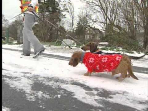 Cold Weather Chills Pets - Animal Welfare Groups Urge Owners to take Extra Care of Animals