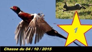 chasse aux faisans et lapins avec setter anglais (le 4 octobre 2015)