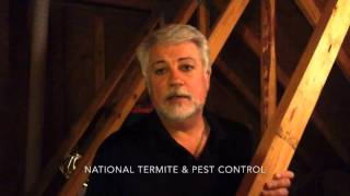 Roaches & Rats in Attics - Signs of bugs in attics and what to do