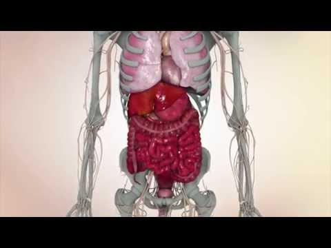 Tratamentul helminților în timpul sarcinii