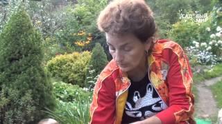 Луковичные ирисы: особенности посадки видео
