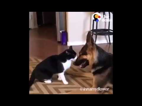 Cat-Dog fighting