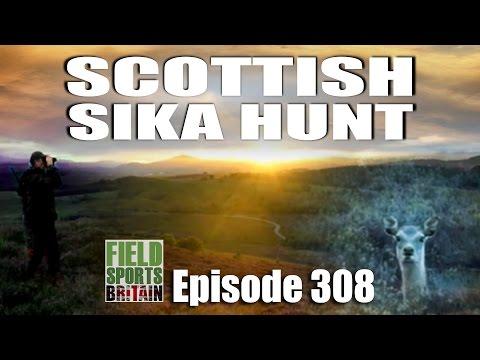 Fieldsports Britain – Scottish Sika Hunt