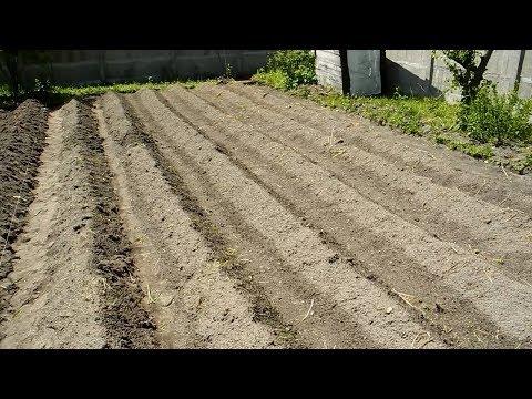 Много Урожайная посадка картошки,Голландский метод