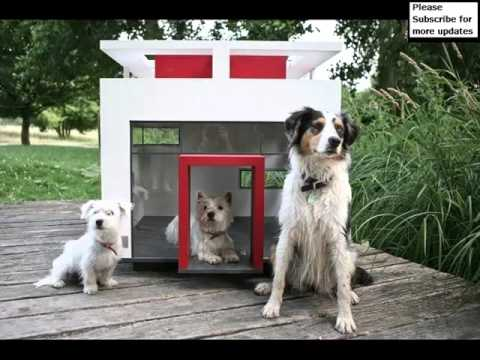 Dog House Designs Set Of Useful Picture Ideas | Dog House Designs Dogs