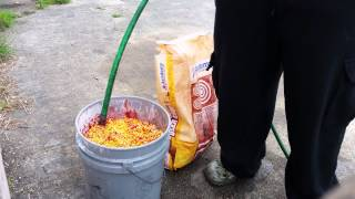 How to make Hog Bait for 10 dollars or less