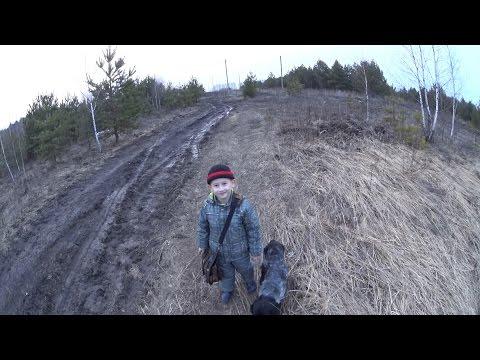 Охота на вальдшнепа 1. Woodcock hunting