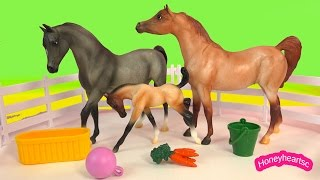 Breyer Mare Mom Foal Baby Stallion Dad Champion Is Born Horse Playset Breyers Video