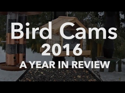 Bird Cams 2016: A Year In Review