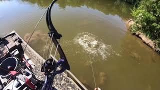 Bowfishing Grass Carp During The Day (4k Bowfishing)