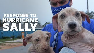 Helping animals impacted by Hurricane Sally by The Humane Society of the United States