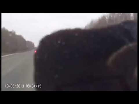 Сбил медведя на трассе!