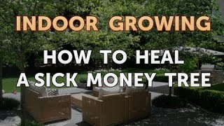 How to Heal a Sick Money Tree