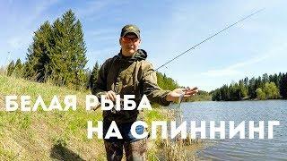 Ловля мирной рыбы на спиннинг