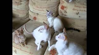 Самые веселые котики