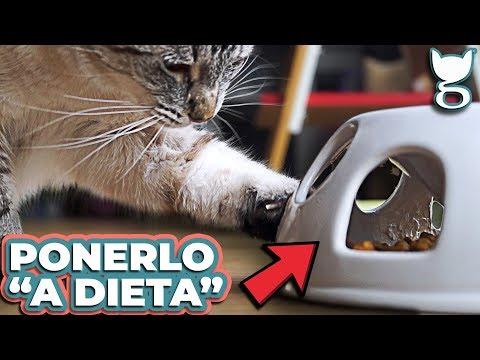 Nuova tecnologia per la perdita di grasso